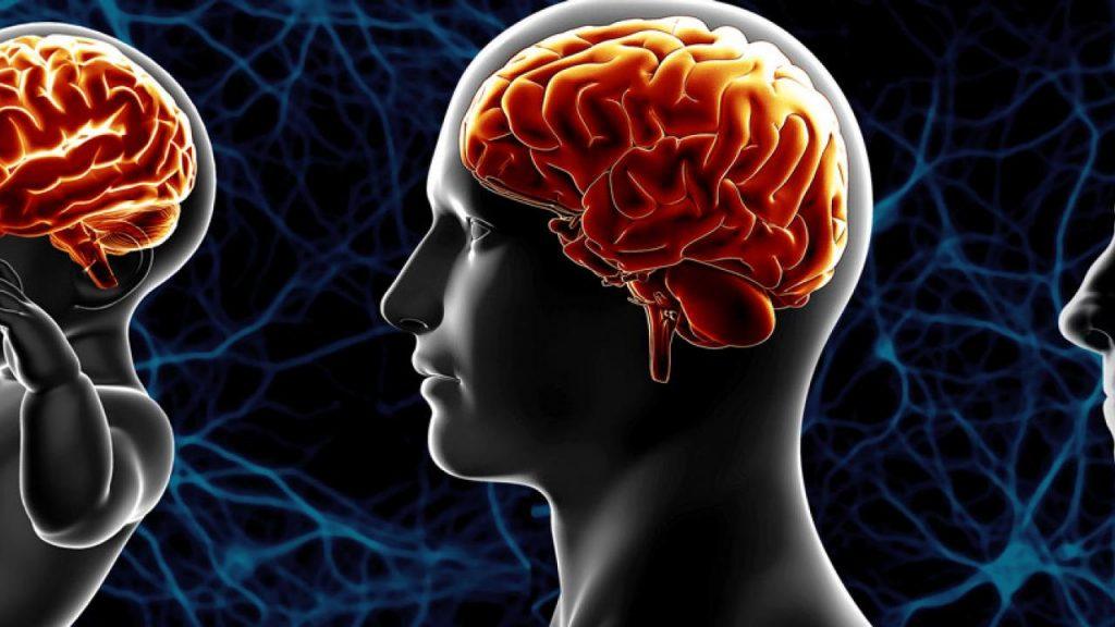 brain supplement neuriva reviews